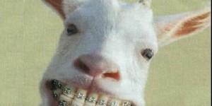 Iubeste-ti capra
